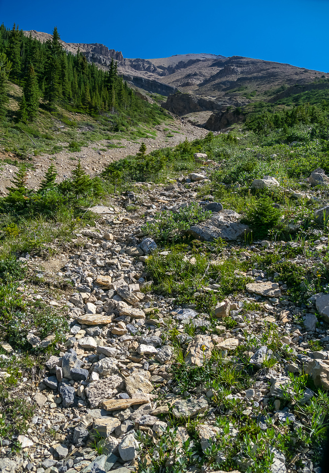 Looking up the avi gully. Stick to climber's right for the best trail / ascent options.