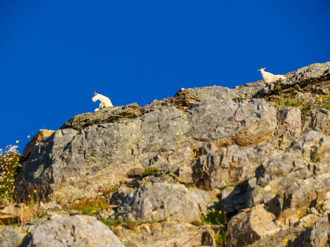 A magnificent billy goat and his mate gaze down at us as we climb towards them.
