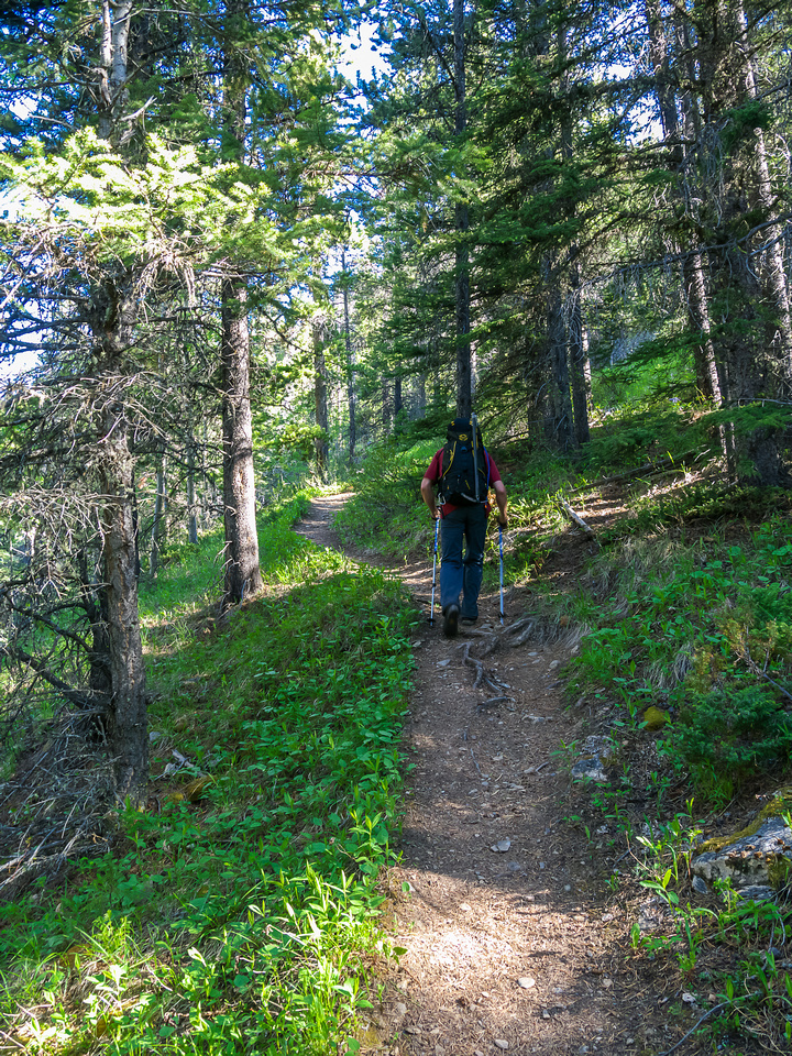 The Aylmer Pass trail is inviting and relentlessly takes you up from the lake shore.