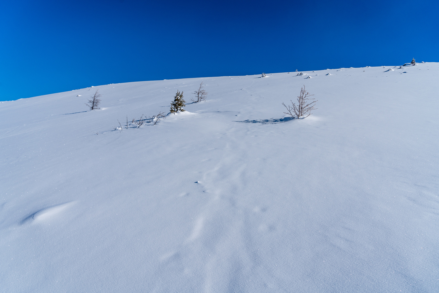 Untracked powder.