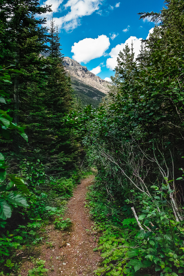 A trail never looked so inviting!