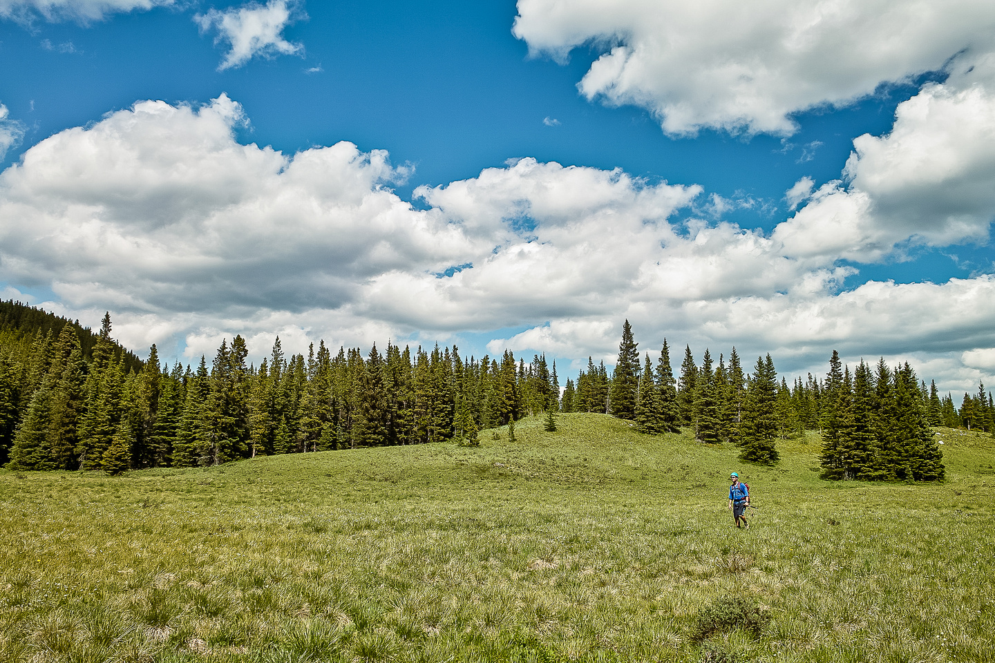Open meadows with big puffy clouds and millions of flowers. What more could Kevin possible want?