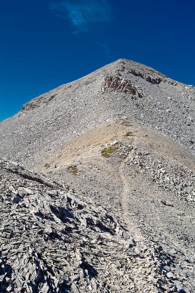 This is a popular peak with both sheep and humans and there are trails in the scree to prove it.