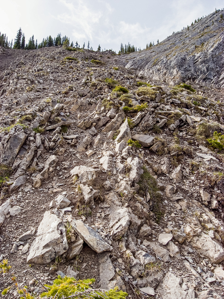 Once you get to the top of the first long scree bash you get slabs and trees and scree! Stick to climber's left for less exposure.