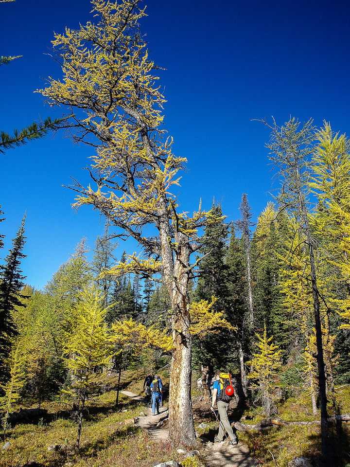 Hiking up Larch Valley to Sentinel Pass.
