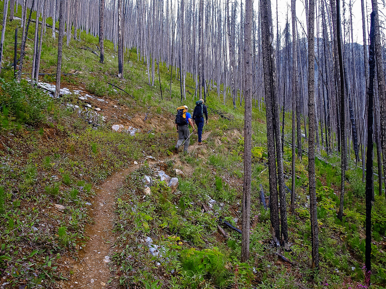 Wietse and Jeff set a brisk pace up the trail through burnt forest.