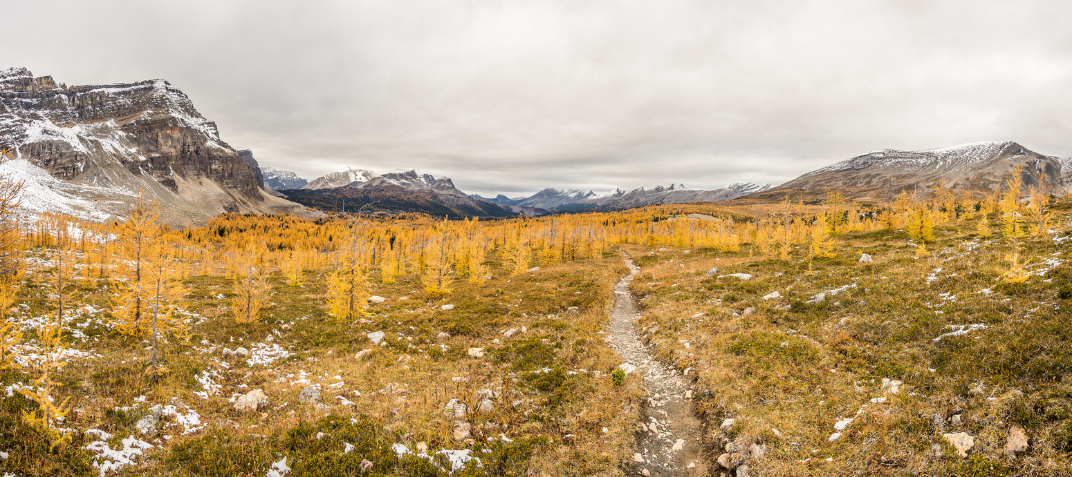 An amazing 'dwarf' larch forest on the way back towards Gog Lake. Naiset Point at left and Cautley at right.