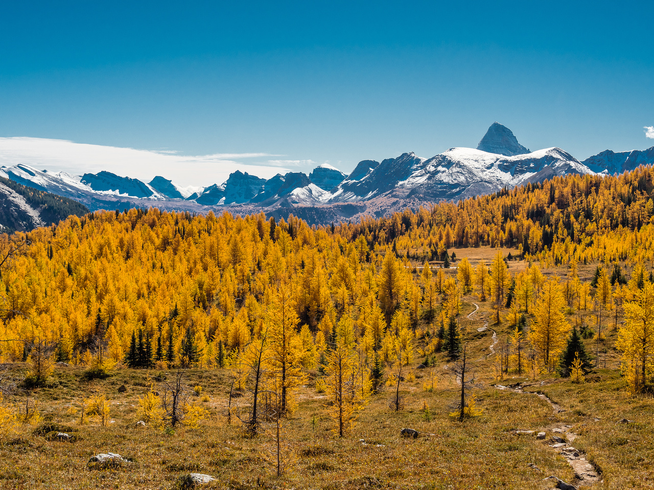 "The mighty ""A"", Mount Assiniboine, and a larch forest."