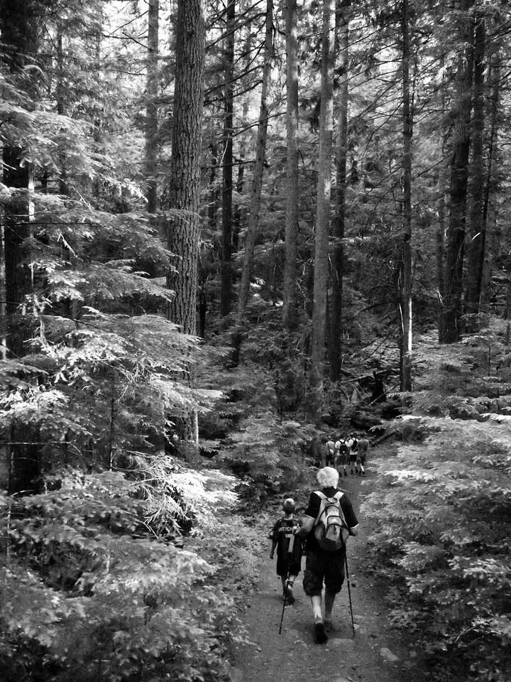 The gang sets off through the forest.