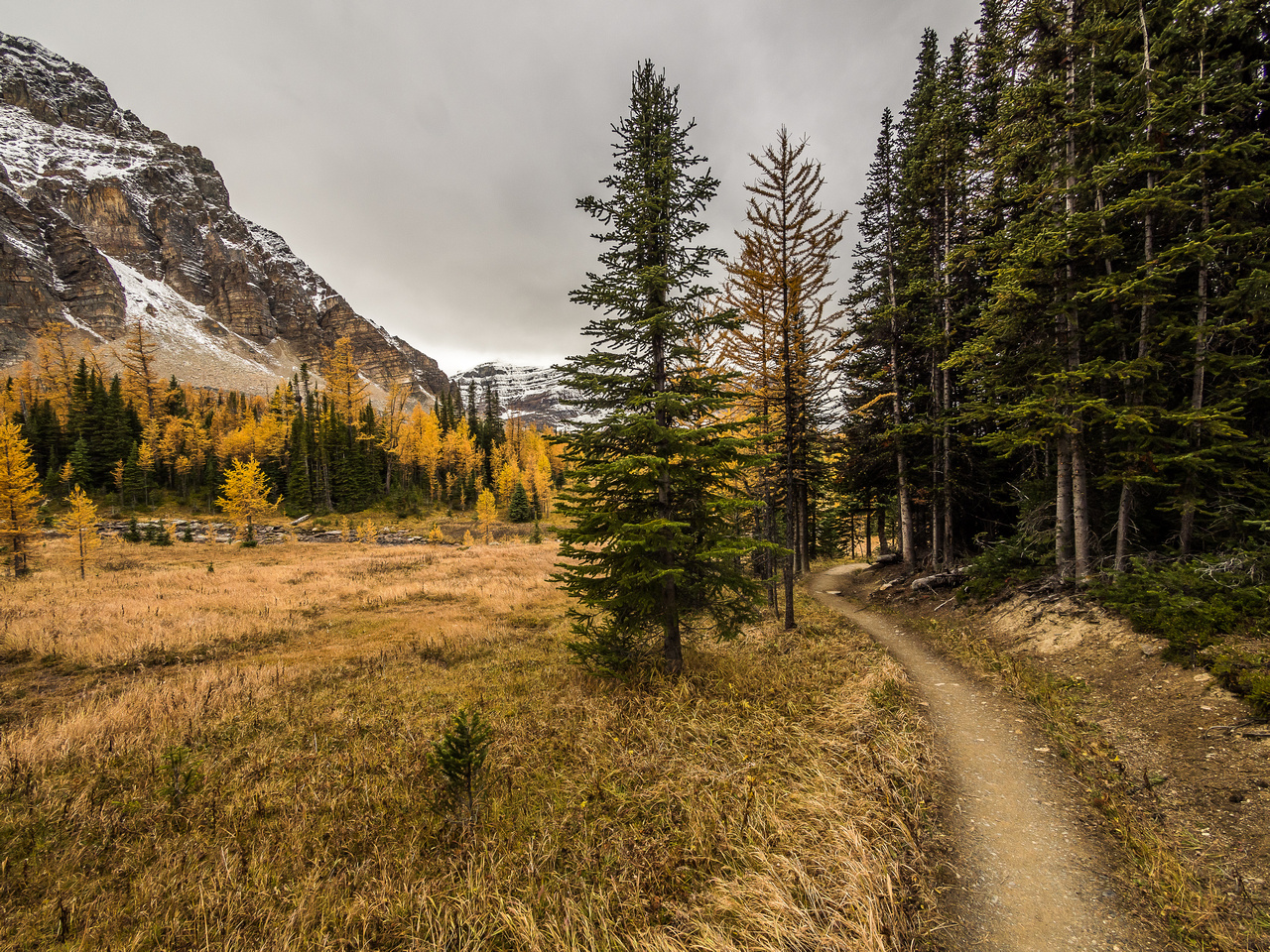 The Wonder Pass trail snakes alongside the forest as it winds its way back to Lake Magog.